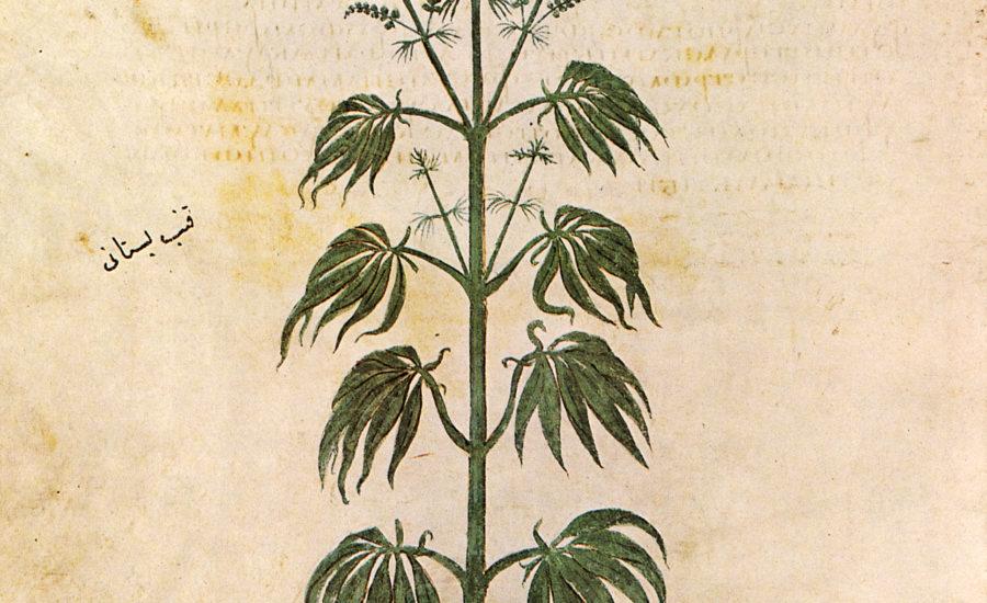 Cannabis nella storia