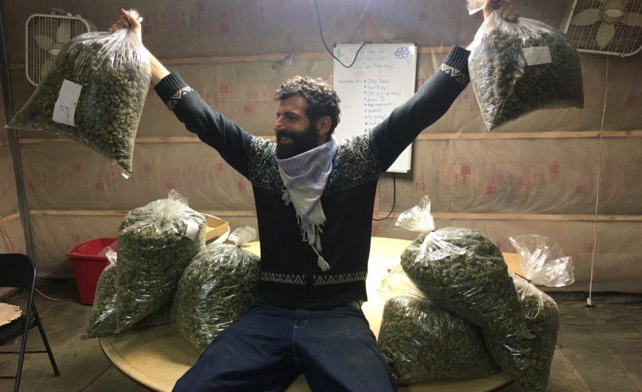 Oregon Cannabis 3
