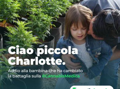 Charlotte cannabis medica