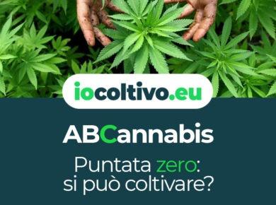ABCannabis - Puntata zero